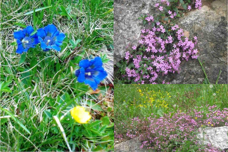 fiori rari monte lefre